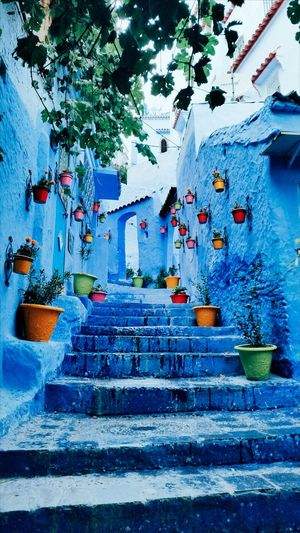 No People Building Exterior Sky Blue Architecture Stairs Stairs_up Bluestairs Bluehouse Wet Floor Morocco Moroccan Architecture Bluecity Hanging Flowers Tree Up Walkingup Colours Paint Blue Background Blue Color Stairs To Heaven Stairs_collection EyeEmNewHere First Eyeem Photo