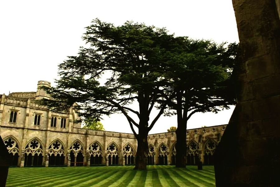 English courtyard Landscape_photography Trees Flowers, Nature And Beauty