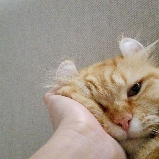 Cats Curly Kinkalow Instacats
