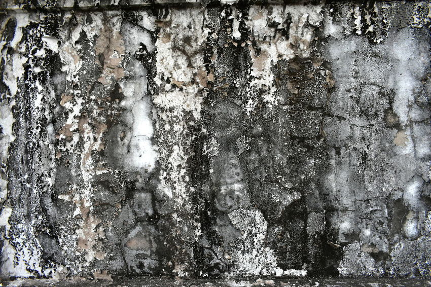dead moss and lichens on concrete buddhist temple wall Dirty Wall Abstract Backgrounds Artistic Wallpape Black And White Dead Lichens Dead Moss Dirty Buddhist Temple Wall As Background Dry Dead Moss And Lichens On Concrete Buddhist Temple Wall Needs Cleaning