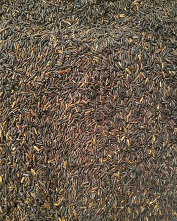 Full Frame Backgrounds Textured  No People Large Group Of Objects Close-up Day Black Rice Rice Food Pattern, Texture, Shape And Form