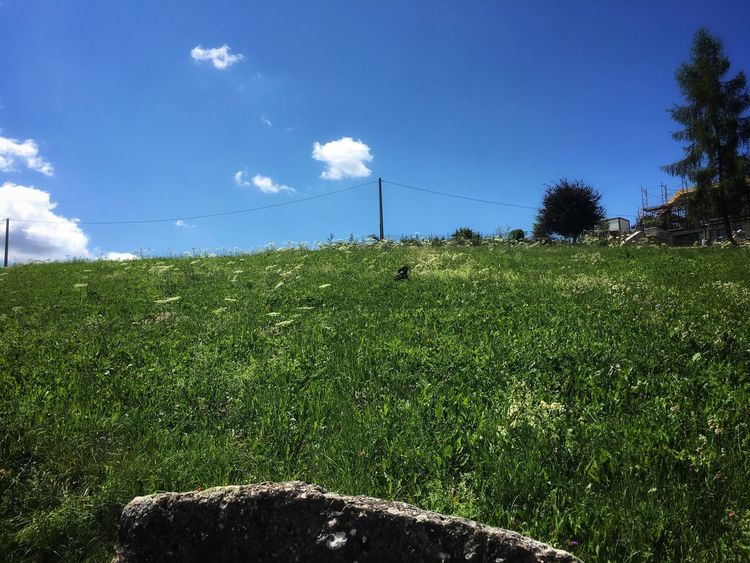 Grass Field Nature Growth Sky Landscape Tree No People Day Outdoors Beauty In Nature Blue Sky