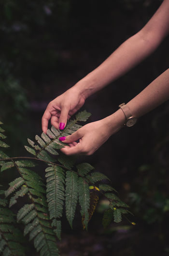 Cropped Hands Of Woman Touching Leaves