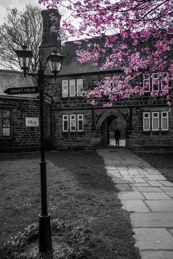 The path that leads from Croston Churchyard. Architecture Built Structure City Day Empty Façade Flower Grass Growth Lawn Nature Sky Tree Walkway