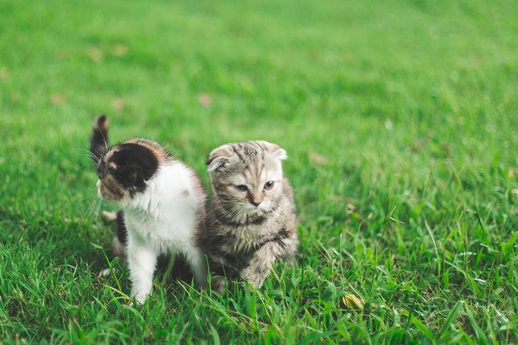 View of kitten on field