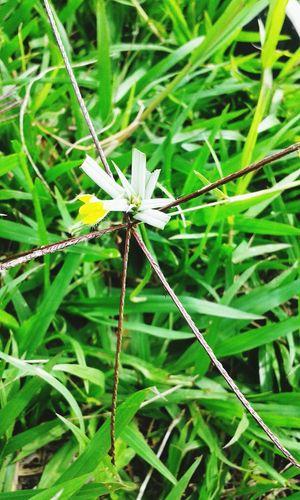Flower ♡ EyeEmNewHere