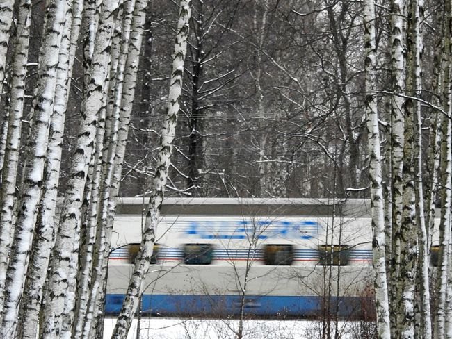 Аллегро Speedy Train Train Allegro To Finland Sankt-Petersburg Colors Of Sankt-Peterburg My City Park Trees Snowing ❄ Russia North Snow Tree Winter Day Weather Outdoors Cold Temperature Shades Of Winter