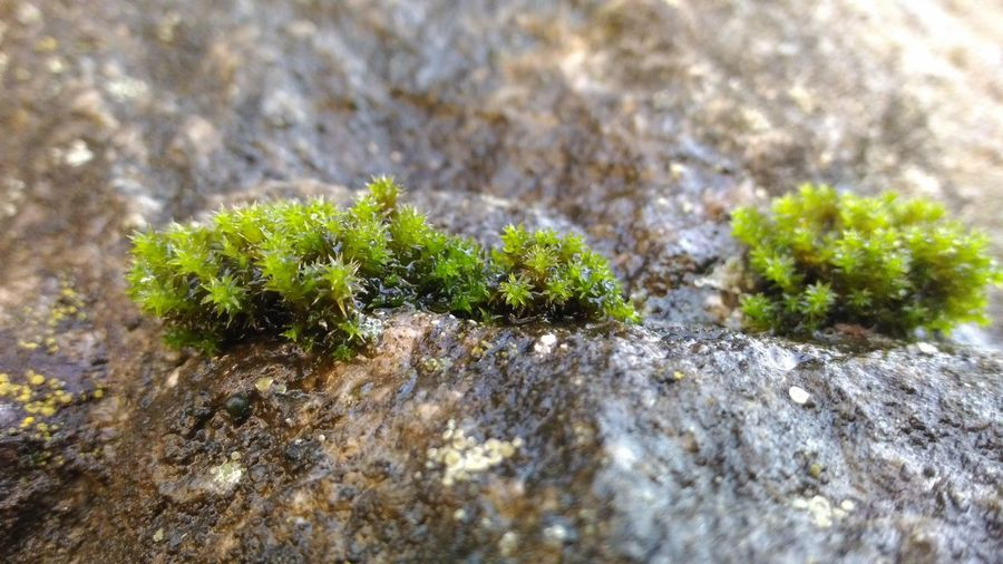 moss on the rocks Stones Stones And Flowers мох камни Sunlight Moss Close-up Plant Green Color Grass