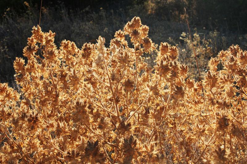 Dry Flower  Dry Leaves