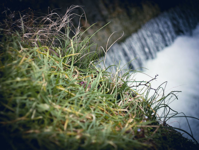 Plant Selective Focus Grass Growth Land Nature Green Color No People Day Field Beauty In Nature Close-up Tranquility Outdoors Winter Cold Temperature Water Fragility Moss Scenics - Nature Blade Of Grass Lomography