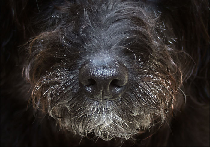 Close-up Day Dog Dog Nose Hund Looking At Camera No People One Animal Pets Photography