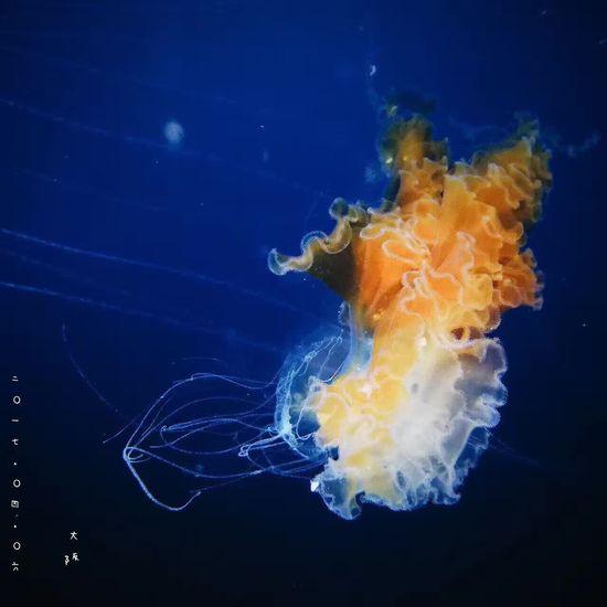 水母,美的如此像星雲。(世界最大海洋館之一,大阪海遊館) Hello World Photography First Eyeem Photo Blue Beautiful Jelly Fish Aquarium Kaiyukan Enjoying Life Travel Japan OSAKA