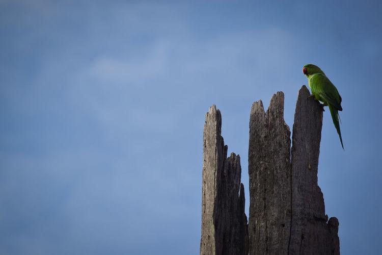 My Click Nikon D3300 Parrot