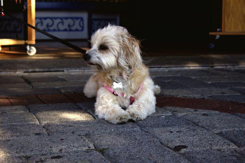 Nalah Dogslife
