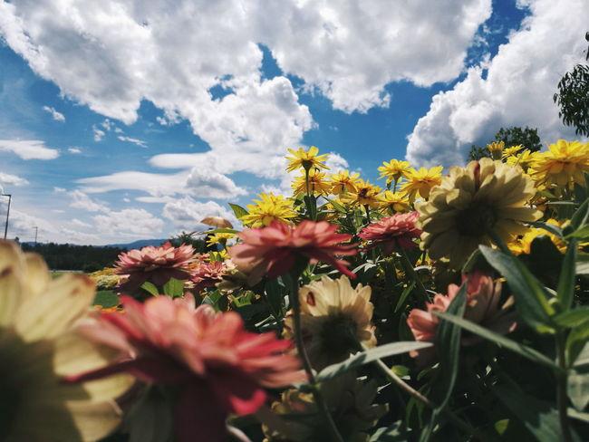 Flower Cloud - Sky Nature Blossom Sky Summer Outdoors Beauty In Nature Landscape Freshness EyeEm Nature Lover EyeEm Vision EyeEm Market © EyeEmNewHere Plant