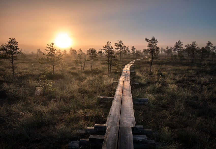 Scenic view from swamp with wooden path at autumn morning in Torronsuo National park, Finland Finland Footpath Landscape_Collection Path Swamp Tranquility Atmospheric Mood Beauty In Nature Fog Foggy Grass Growth Landscape Nature No People Outdoors Pathway Scenics Sky Sunrise Sunset Tranquil Scene Tranquility Tree Wood - Material
