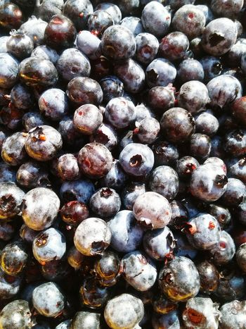 Blueberries Summer Blue Berries Nature Foraging Delicious Food