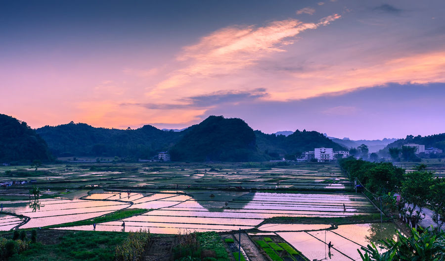 Sunset over rice field in South China Agriculture Beauty In Nature Cloud - Sky Field Landscape Mountain Nature No People Outdoors Rice Paddy Rural Scene Scenics Sky Sunset Tranquil Scene Tranquility Tree Water