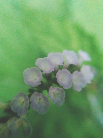 Nature Fragility Flower Plant