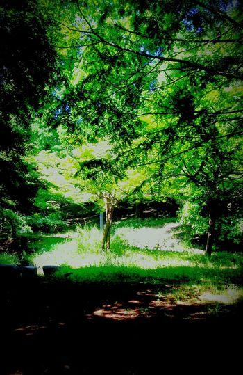 Green Tree Tuning Smoking One Love EyeEm Best Shots - Nature Enjoying Nature Light And Shadow Enjoying Life Life's Journey  Hello World Enjoying The Sun 光 影 脳 心 身体 生命 音 縁 土 童 Everyday Joy Bestfriend Good Times 久しぶりにドキドキしちまった日曜日。
