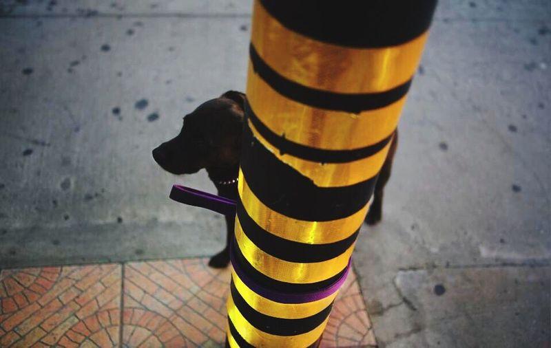One Animal Striped Mammal Animal Themes Animal Day Domestic Animals