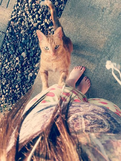 Mi gato. Cat Cute Photography Beautiful