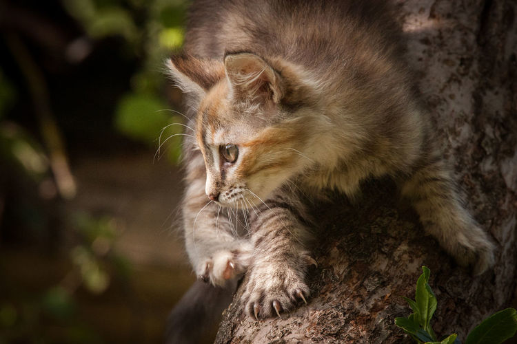 A cute tricolor kitten climbing a tree Animal Animal Head  Animal Themes Cat Close-up Domestic Domestic Animals Domestic Cat Feline Mammal No People One Animal Pets Vertebrate Whisker