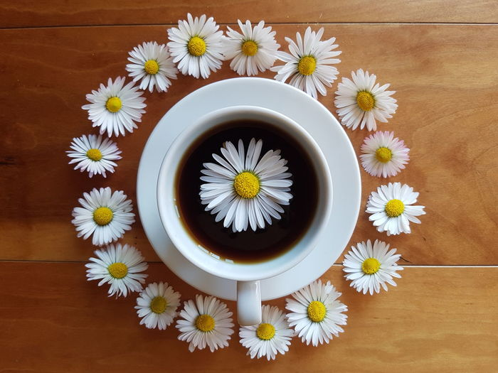 High angle view of daisies on table