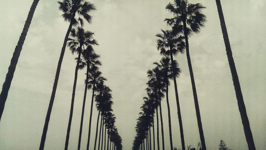 Palms Palm Trees Street Perspective Lines Lines And Shapes Beach Boulevard