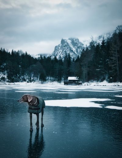 Full length of person standing in lake against sky during winter