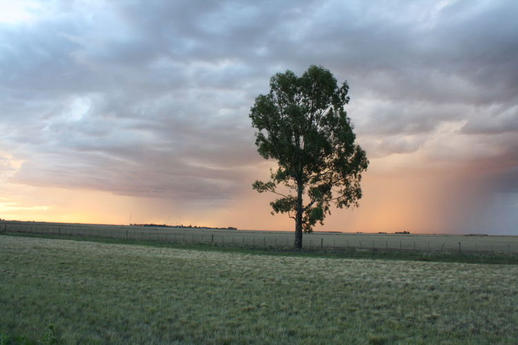 Lonely tree on