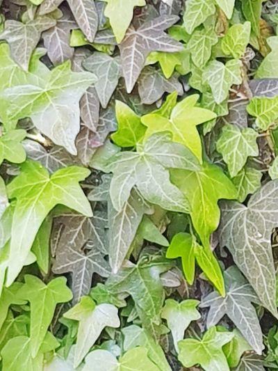 Leaf Backgrounds Full Frame Close-up Green Color Plant