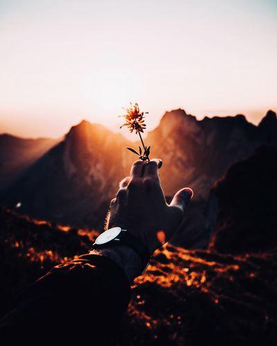 Cropped hand holding flower against mountain range