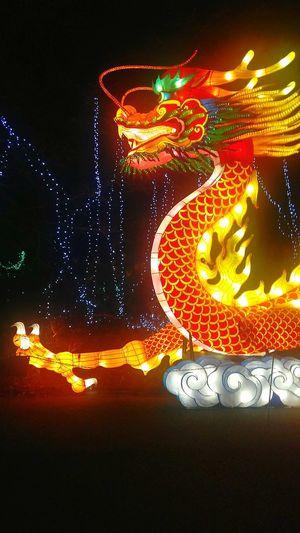 Ireland🍀 Lightdecor Nature Dragon Chinese Chinese Lantern Festival Illuminated No People Indoors  Night Black Background Close-up