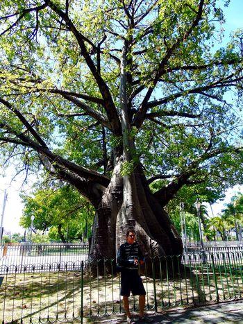 Baobab Tree Hugging A Tree EyeEm Nature Lover Flowers,Plants & Garden Hello World Nature Planet