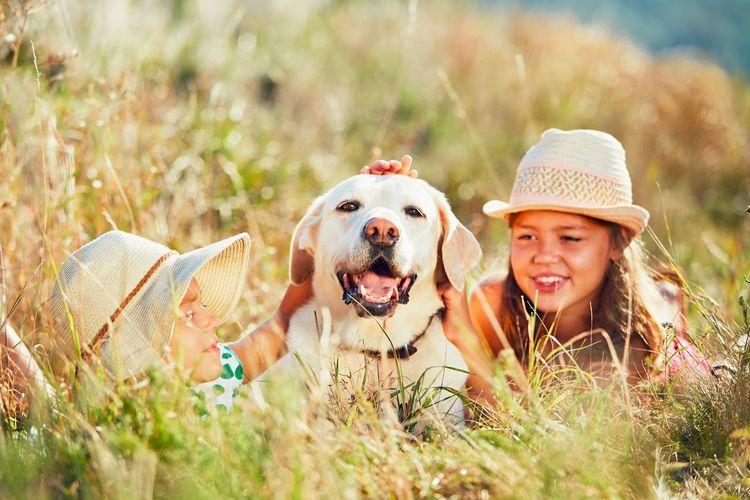 Siblings stroking dog on grassy field