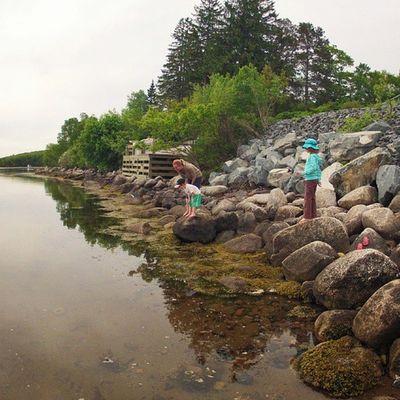 Looking for Crabs . Threeframestories : 2