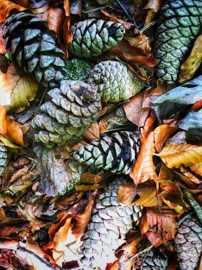 Thumble Leaves