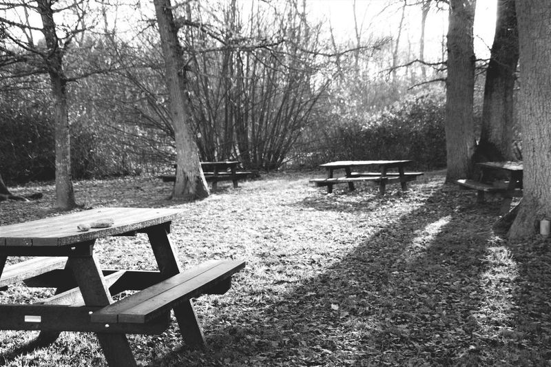 Et Si On Pique Niquait Nature Is Beautiful Table En Pleine Nature Decembre Foret Apprendre La Photo Canonphotography Love Photography Passion Noir Et Blanc Capture The Moment