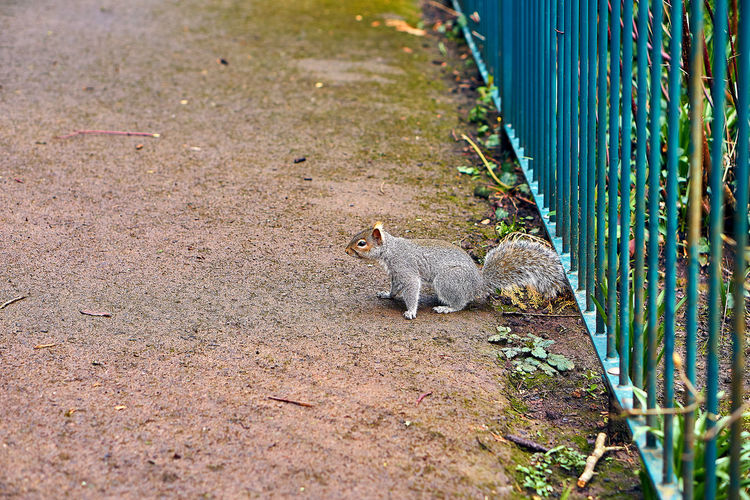 View of squirrel