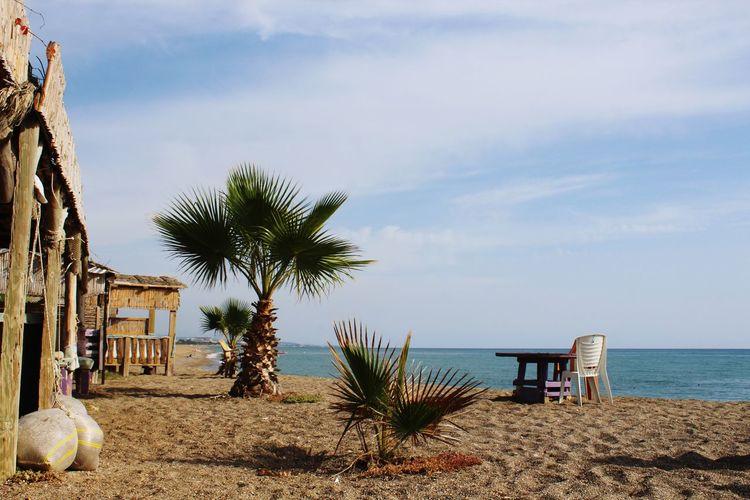 Turkey Türkiye Tree Water Palm Tree Beach Sea Sand Sky Architecture Building Exterior Built Structure The Traveler - 2019 EyeEm Awards
