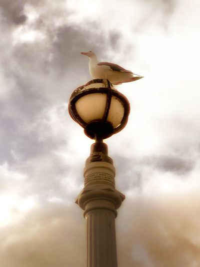 Low Angle View Street Light Lighting Equipment Architecture Built Structure High Section Animal Themes Bird Sky Cloud - Sky Building Exterior Cloud Lamp Post Tower Outdoors Day Cloudy Tall - High Avian No People From My Point Of View Nature_collection Nature Photography