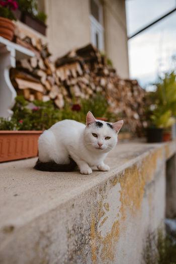 Cat lying on retaining wall
