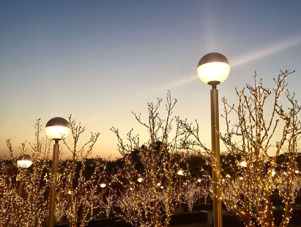 illuminated, lighting equipment, plant, sun, growth, no people, nature, street light, outdoors, sky, flower, beauty in nature, tree, moon, fragility