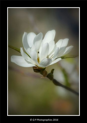 Flower Photography Flowers, Nature And Beauty Flower Collection Flower Macro Close Up Nature Nature_collection