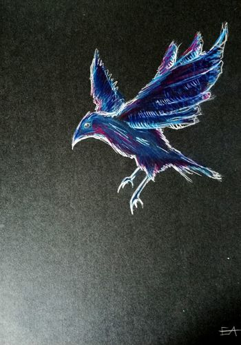 High angle view of bird flying over black background