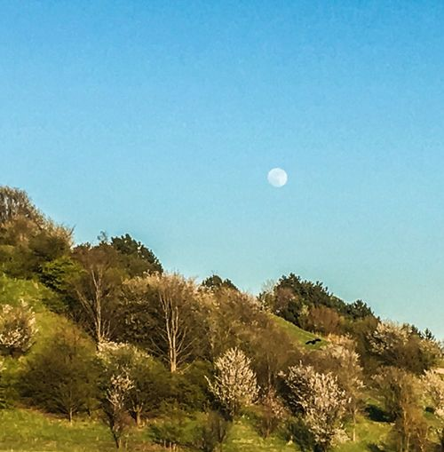 Moon Mane Himmel Heaven Landscape Landscape_Collection Landscapes With WhiteWall Udsigt Bakke Nature Nature_collection Nature Photography Naturephotography Moon Shots Tree Trees Tree And Sky Trees And Sky EyeEm EyeEm Gallery EyeEmPaid Photooftheday Denmark Danmark Sjælland