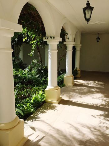 Architectural Column Architecture Corridor Indoors  Built Structure Arch No People Day Sunlight Growth Nature Porto Seguro, Bahia