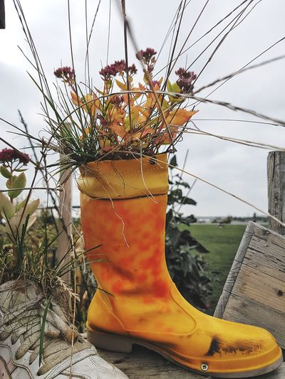 No People Nature Outdoors Sky Day Close-up Rubber Boots Urban Gardening Orange Color City Nature Growing Autumn Fall Autumn Colors Unexpected Tempelhofer Feld Urban Landscape Berlin
