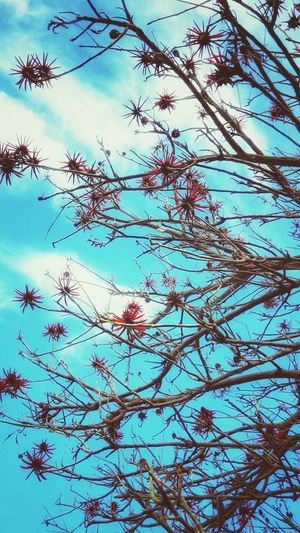 blue sky, red